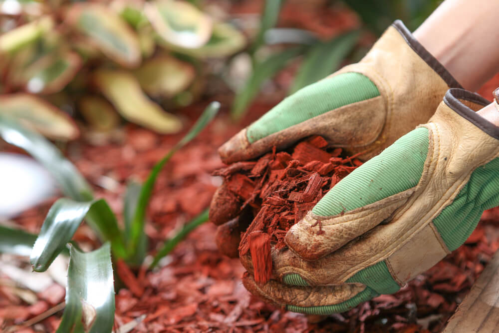 4 Do's and Don'ts to Keep in Mind When Applying Mulch