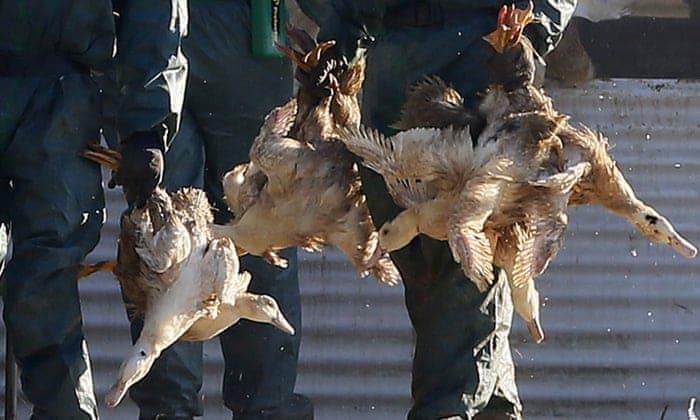 France Issues High Risk Alert for Bird Flu