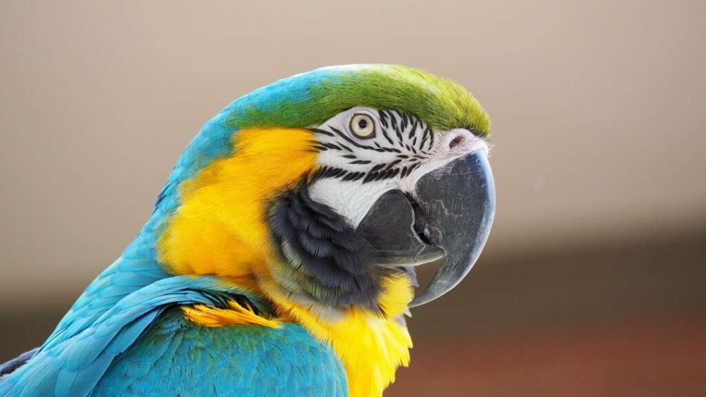 macaw parrot price in india